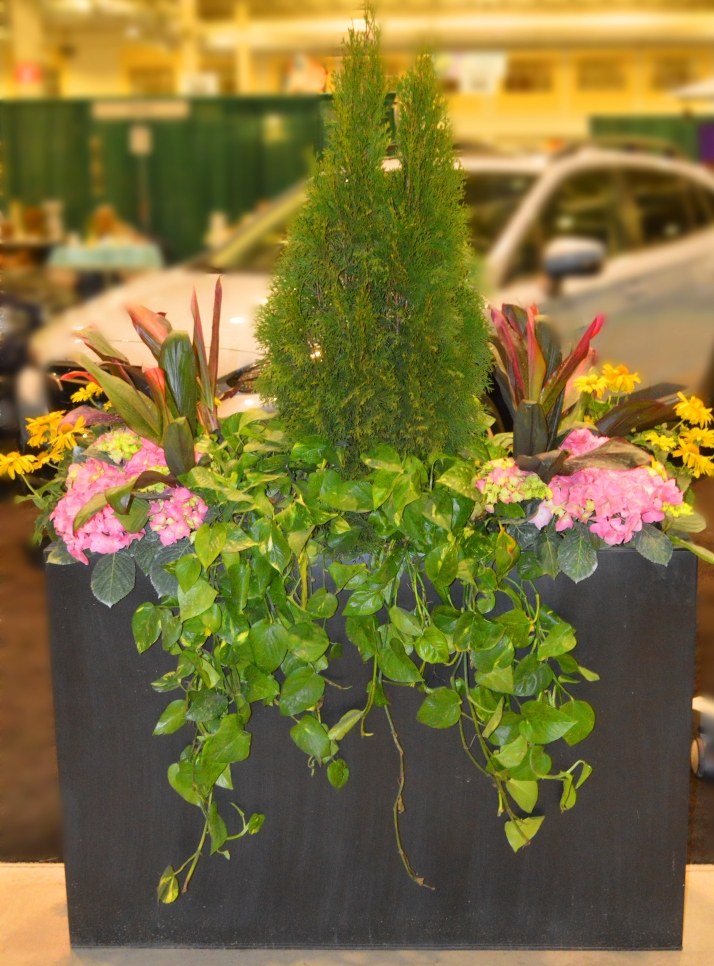 flower-show-1.jpg