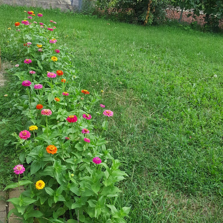 Backyard Flower Bed
