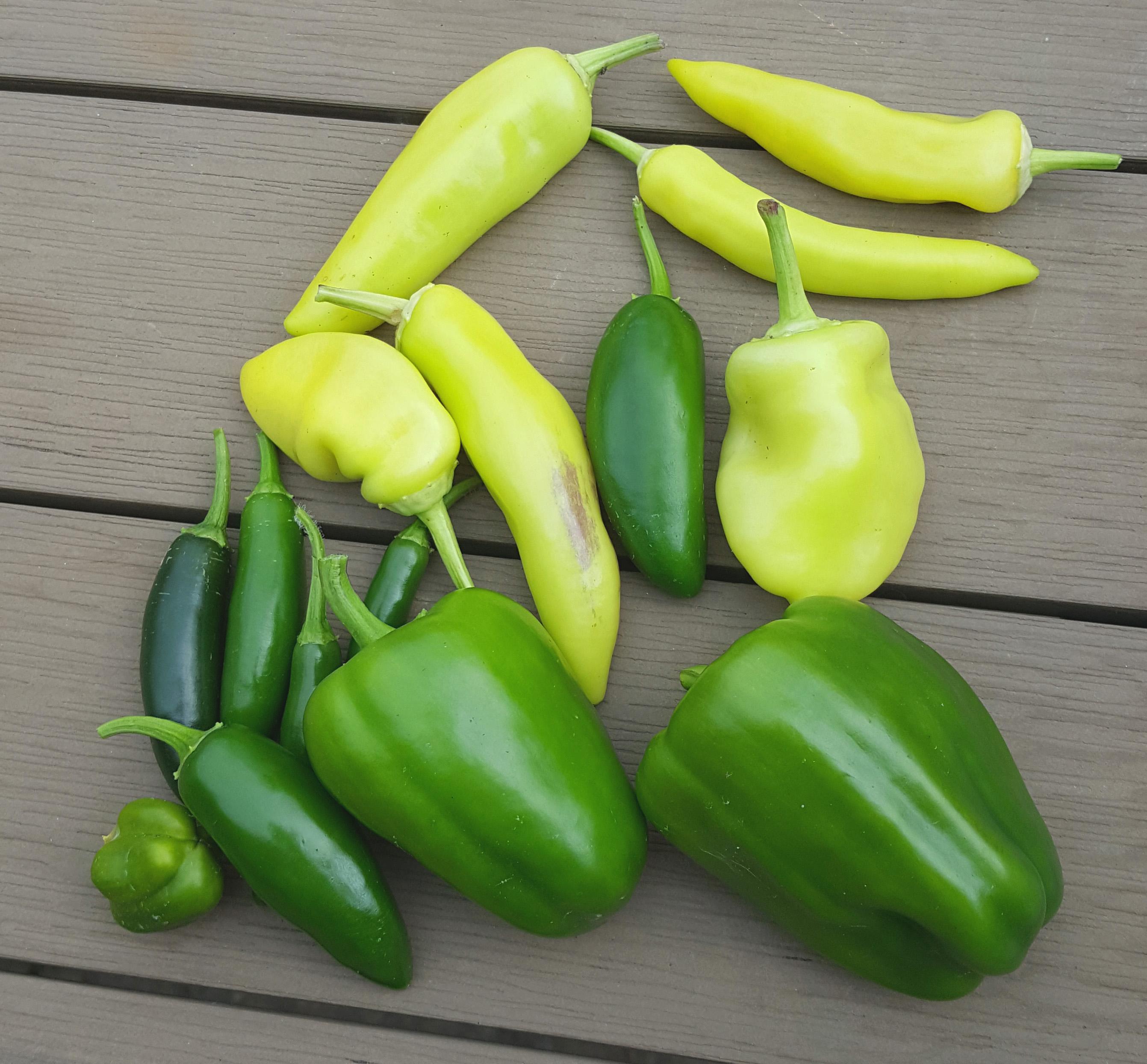 Backyard Peppers Harvest